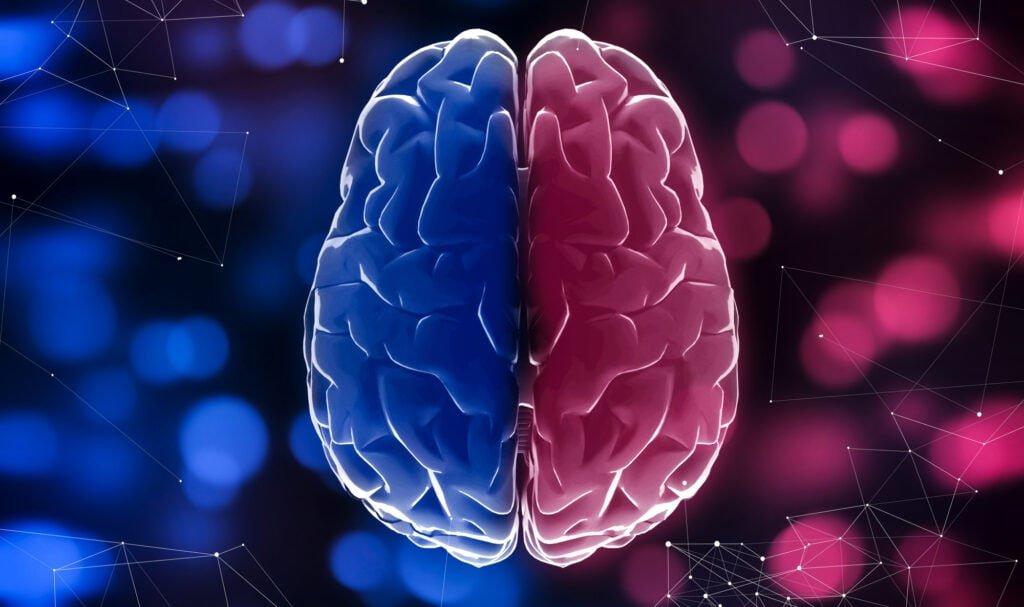 Beide Gehirn Hälften