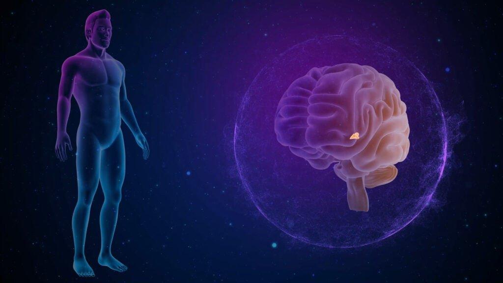 Zirbeldrüse im Gehirn