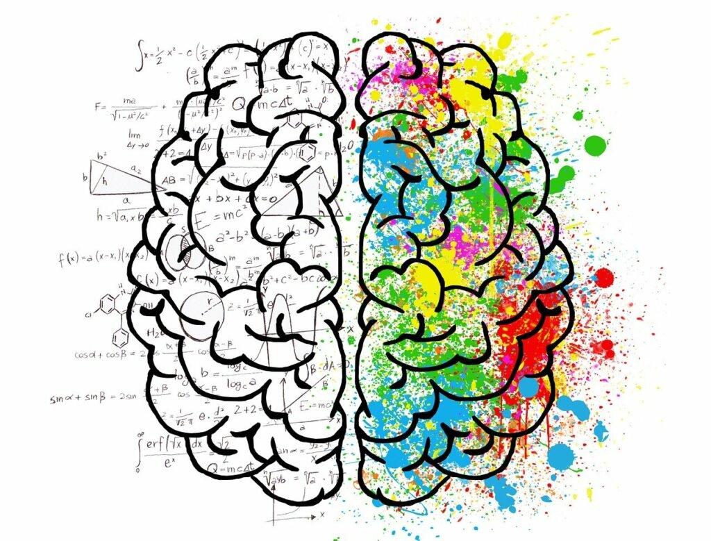 Gehirnhälften farblich dargestellt