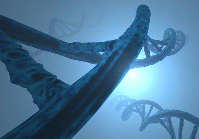 Meditation schützt die Enden des DNA-Strangs (Telomere) und führt daher zu einer verringerten Abnutzung der Zellen.